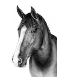 Horse by petpaintings