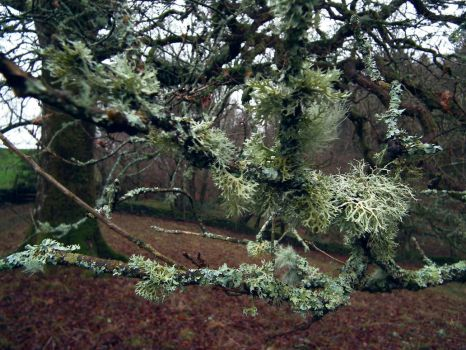 moss branches by harrietbaxter
