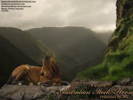 HP - Jen Aust. Stock Horse by EscapeFromWonderland