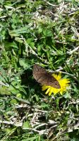 Butterfly with Dandelion by CameronBrownArt