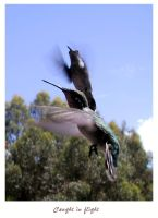 Caught in flight by cra5her