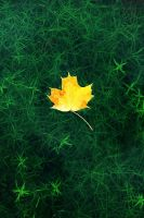 Gold on Green by Earth-Hart