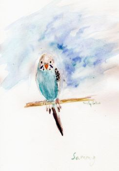 Sammy the Budgie in watercolor by HaleyGottardo