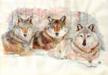 The Wolves' Conference by moyan