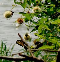 Butterflies by the Lake by DesiaB