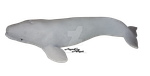 Beluga - toy by AgnessAngel