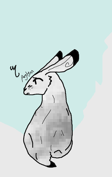 Arctic hare by Auglynn