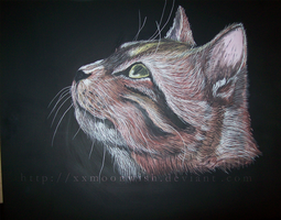 Scratch Art Kitty by TheMoonfall