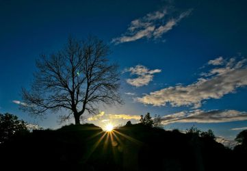 On a lonely hill stands a lonely tree by BusterBrownBB