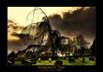 Sorrowful tree - HDR by sxy447