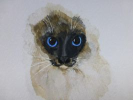 Siamese watercolor painting by Actlikenaturedoes