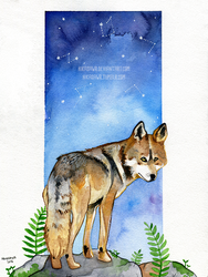 Wolf by the stars by Hikasawr
