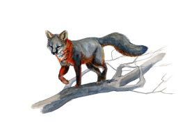 Prowler by SALTWatercolors