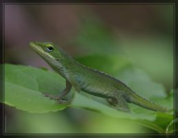 Green Anole 20D0035001 by Cristian-M