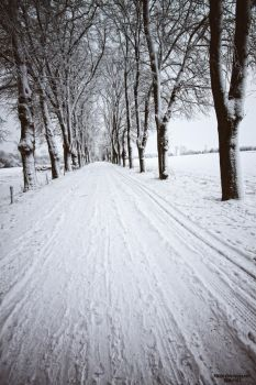 .:White Alley:. by Frank-Beer