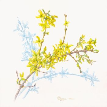 Forsythia. by gudzolga