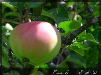 Applefront by stfstf