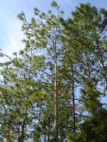 Wind in the trees by 2011Roo