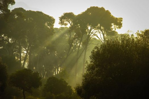 trees fog by AlgerianStocker