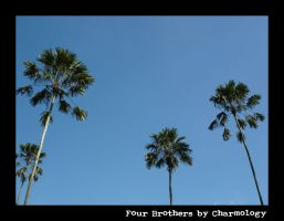 Four Brothers by Charmology