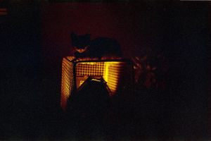redscale cat by elultimodeseo