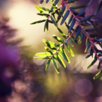 Welcome the sunny days by Karisca