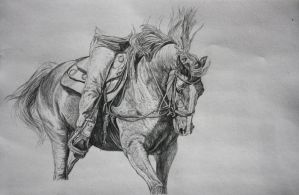 Pencil Sketch horse 2 by sunwolf29