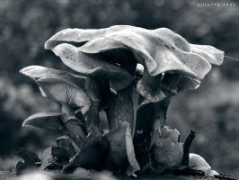 'shrooms 2 by zilla774