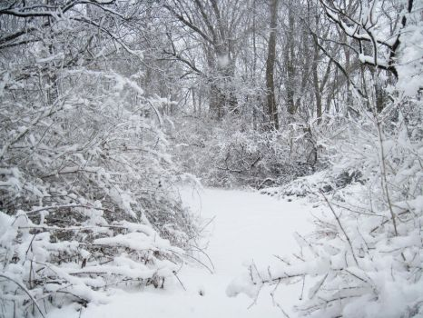 Forest Path in Winter 5 by Martut