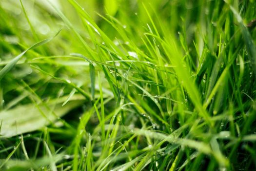 Grass - Free stock photo by SuperSweetStock