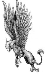 Griffin by Fallimar