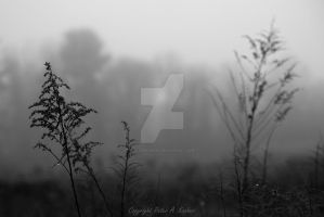 Foggy Morning in Maryland by peterkopher