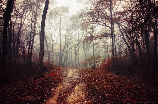Fading Autumn X. by realityDream