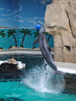 dolphin show 3 by Moerderkind