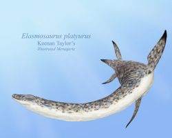 Elasmosaurus platyurus by IllustratedMenagerie