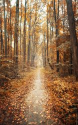 Autumn wood in Russia by Cvet04ek