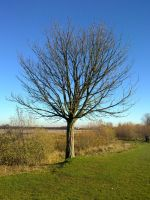 Chasewater 2010 4 by azrealdrogan