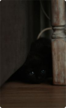 .Kitteh's scared D: by xXx-Raven-xXx