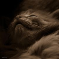 Sleeping by Rayon2lune