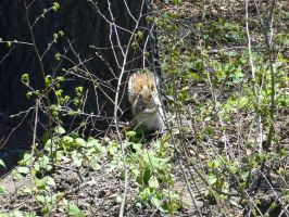 Central Park Squirrel 2 by SayuriMVRomei