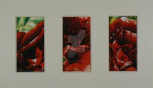 Pivoine rouge triptyque by Martine-m-richard