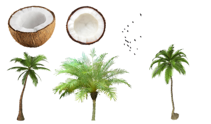 Coconut and tree PNG by Jujoy1990