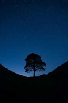 Sycamore Gap. by gsphoto