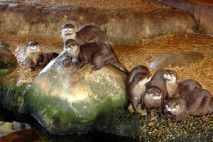 Otters by quentinwrites