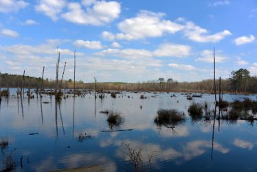 Swamp Reflections 2-9-14 by Tailgun2009