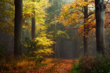 Leaves will cover your Path by Oer-Wout
