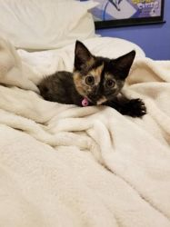 Our baby kitten on our bed by 8TeamFriends8