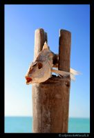 the fish is dry by colpewole