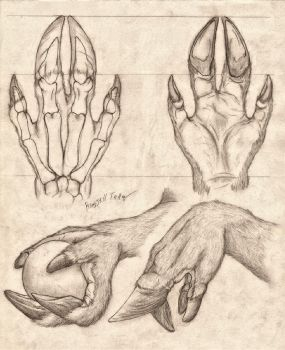 Cervine Hand Anatomy Study by RussellTuller