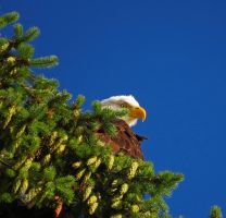 Eagle On Green Hill by wolfwings1